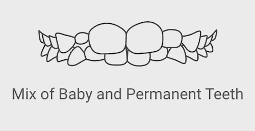 permanent and baby teeth